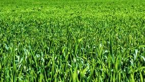 t?a ?r?dpolna trawy ziele? E fotografia royalty free