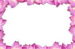 tła ramowe lotosu menchie Obrazy Royalty Free