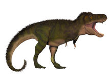 T-Rex Behemoth Royalty Free Stock Image