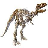 T-Rex de esqueleto ilustração stock