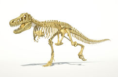 T-Rex dinosaur full skeleton, photo-realistic, sci Stock Photo
