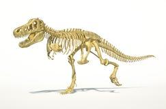 T-Rex dinosaur full skeleton, photo-realistic, sci Stock Photo