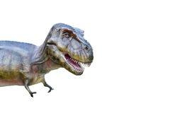 T rex dinosaur odizolowywający na bielu Zdjęcie Stock