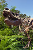 T Rex Dinosaur Skeleton  Stock Photography