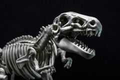 T-Rex Dinosaur skeleton model royalty free stock images