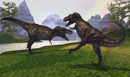 T-Rex Fight. Two Tyrannosaurus Rex dinosaurs fight for the right of a territory Stock Images