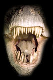 T-rex head royalty free stock images