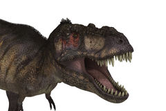 T-Rex Isolated Stock Photography
