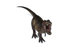 T-Rex isolerade Fotografering för Bildbyråer