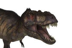 T-Rex isolerade stock illustrationer