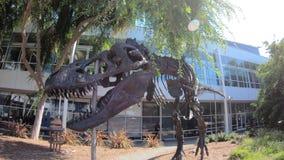 T-Rex kościec przy Googleplex zbiory wideo