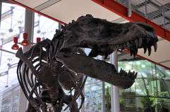 T-Rex Museumseingang Stockbilder