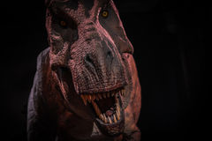 T-Rex na obscuridade imagens de stock royalty free