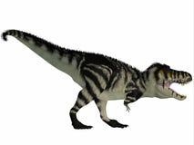 T-Rex noir et blanc Images stock