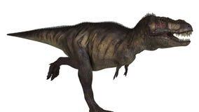 T-Rex Odizolowywał Zdjęcie Royalty Free