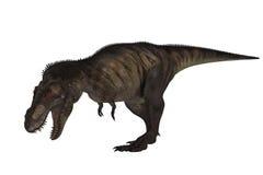 T-Rex Odizolowywał Fotografia Stock