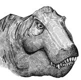 T-rex portrait. Tyrranosaurus rex portrait sketch with sharp teeth and evil eyes drawn in black ink. Big carnivourus dinosaur here Royalty Free Stock Images