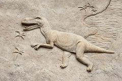 T rex relief Royalty Free Stock Photo