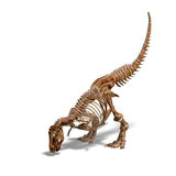 T-Rex Skeleton Royalty Free Stock Photography
