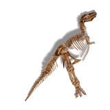 T-Rex Skeleton Stock Photos