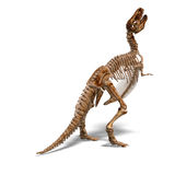 T-Rex Skeleton. Rendering of a t-rex skeleton with Clipping Path and shaow over white Royalty Free Stock Image