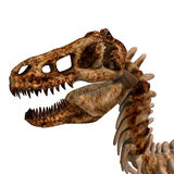 T-Rex Skeleton Stock Image