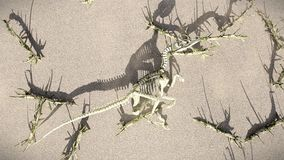 T-Rex-Skeleton lying on the beech 3d rendering Stock Image