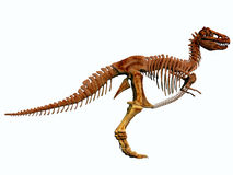 T-Rex Skeleton Royalty Free Stock Images