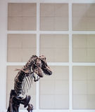 T Rex Skeleton by Wall Stock Image