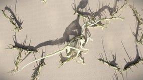 T-Rex-Skelett, das auf der Wiedergabe der Buche 3d liegt Stockbild