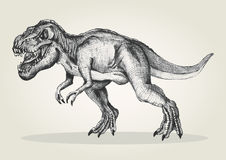 T-rex Stock Photography