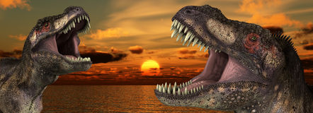 T Rex Sunrise. A Tyrannosaurus Rex roaring at a sunrise Royalty Free Stock Photos