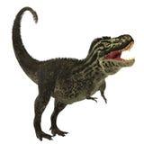 T-Rex sur le blanc Image stock