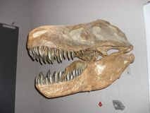 T-Rex stock photos