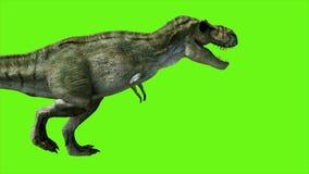 T Rex Tyrannosaur Dinosaur on green screen. GI realistic render vector illustration