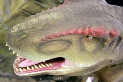T-Rex. Tyrannosaurus Rex head on view. Teeth showing mouth open in warning position Stock Images