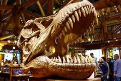 T-Rex Tyrannosaurus Rex ko?ciec fotografia royalty free