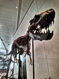 T Rex y huesos fotos de archivo libres de regalías