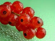 tła rodzynków zieleni czerwoni waterdrops obrazy stock