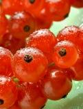 tła rodzynków zieleni czerwoni waterdrops fotografia stock