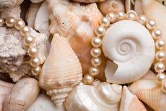 tła seashell Zdjęcia Royalty Free