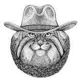 T-shirt animal vestindo selvagem do vaqueiro animal ocidental selvagem do chapéu de vaqueiro do animal selvagem de Manul do gato, Imagens de Stock