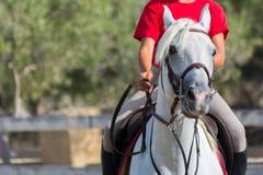 T-shirt vermelho cavalo branco de montada vestido do homem na escola de equitação fotografia de stock