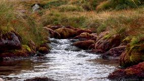 T-Sneachda delicado do allt que flui abaixo do cume durante august nos quartzos defumados parque nacional, scotland video estoque