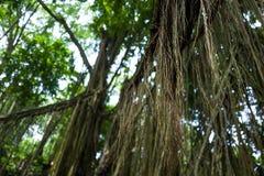 T-Stücke am Ubud-Affe-Wald Stockbilder