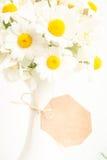 tła stokrotek kwiecisty wektor Zdjęcie Royalty Free