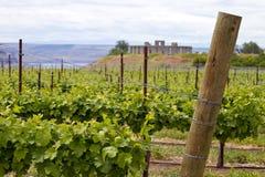 tła stonehenge winnica Obraz Stock