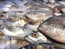 tła surowy rybi Obraz Royalty Free