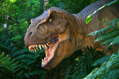T -t-rex Royalty-vrije Stock Foto's