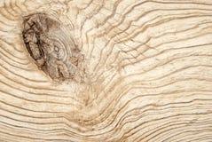 t?t textur upp tr? royaltyfri bild